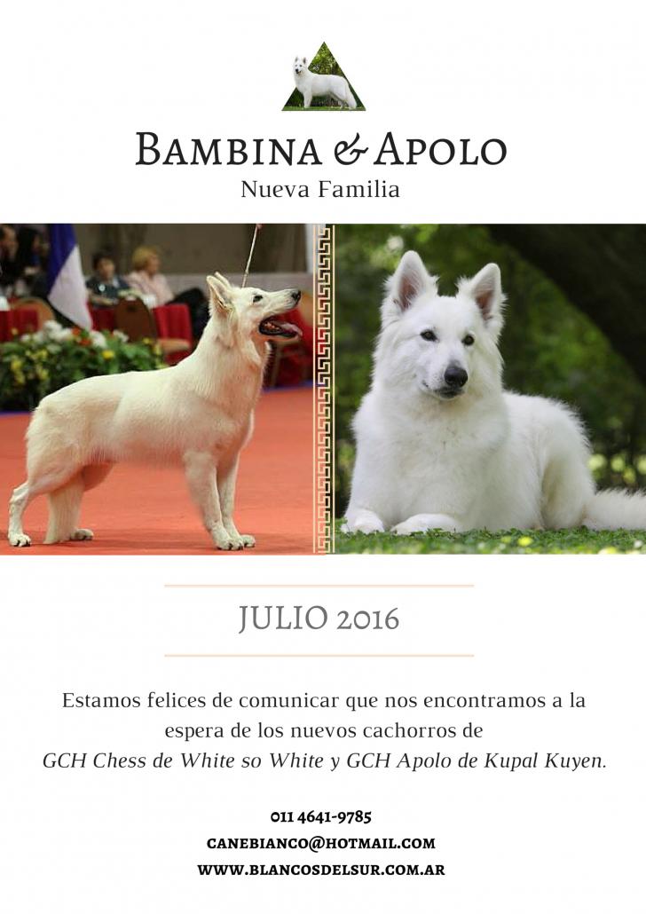 APOLO BAMBI