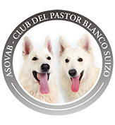 Club del Pastor Blanco Suizo