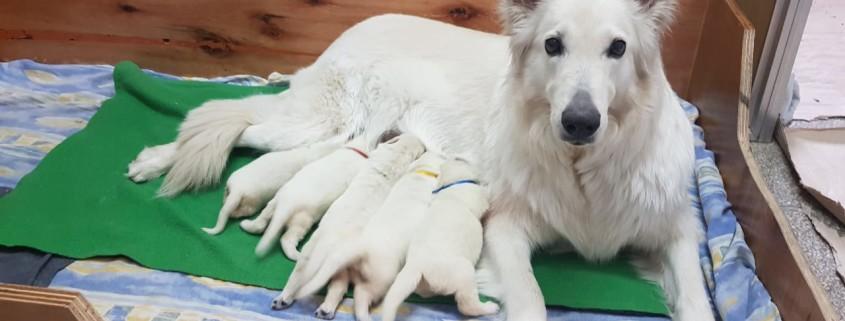 Foto Narda con cachorros 4 10 2018