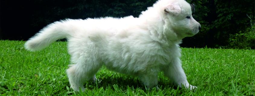 cachorro 2 (1)