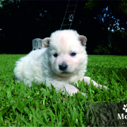 cachorro 3