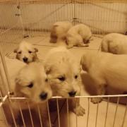 cachorros 30 d 2