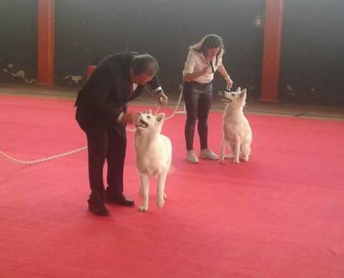 expo cachorros